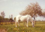1989Ariane01-k